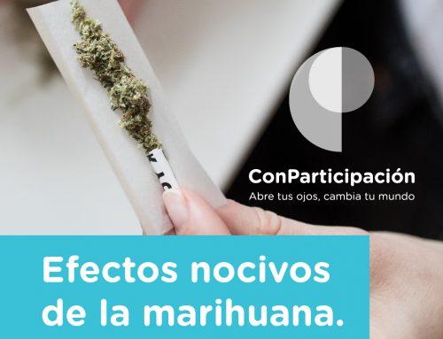 Efectos nocivos de la marihuana.