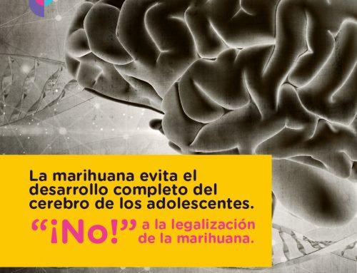 Cerebro del adolescente.