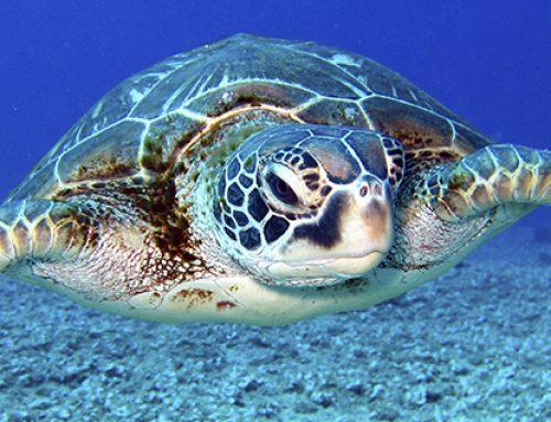 ¡Es incongruente proteger más a los huevos de tortuga que la vida humana en gestación.