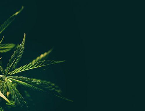 Daños a la salud por consumo de marihuana (parte 3)