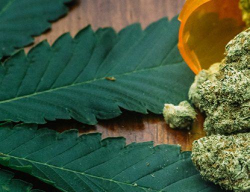 Legalizar la marihuana no protege la salud de los mexicanos (parte 2)